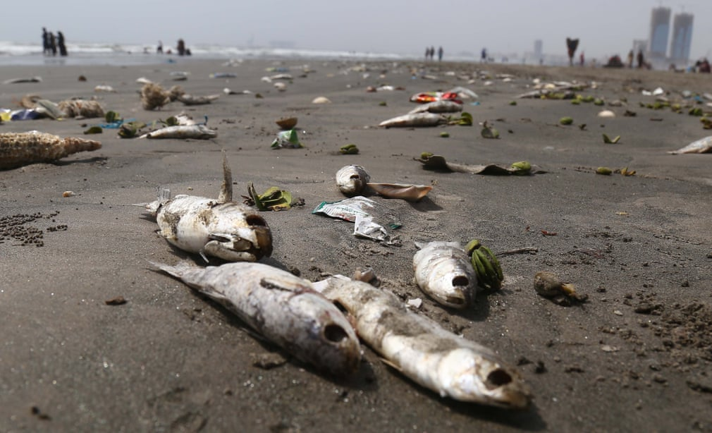 Karachi: Dead fish abound on the shores of Sea View - BaaghiTV English