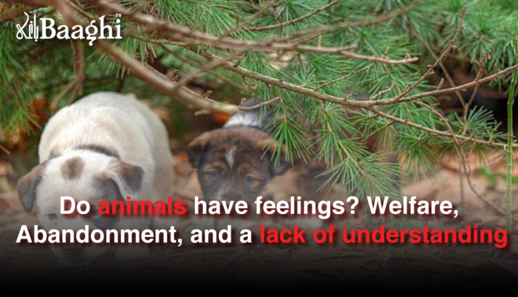 Do animals have feelings? Welfare, Abandonment, and a lack of understanding